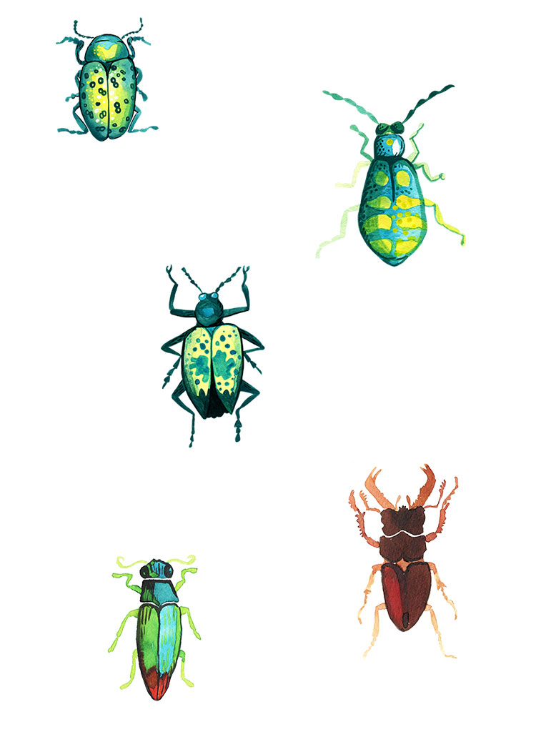 watercolor beetles by Sarah Burghardt
