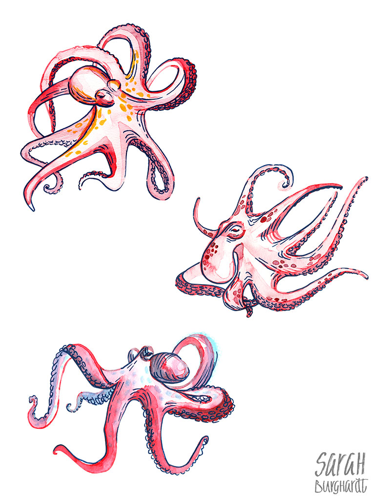 Oktopus illustration Aquarelle by Sarah Burghardt