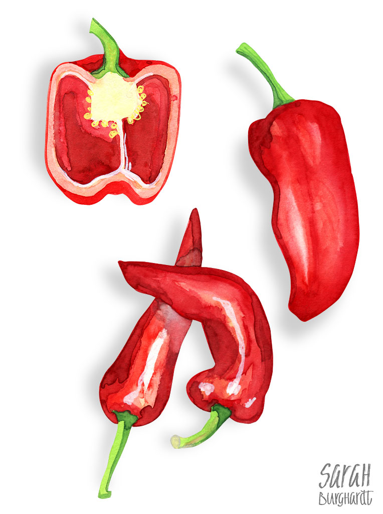 Paprika / Red Pepper Food Illustration