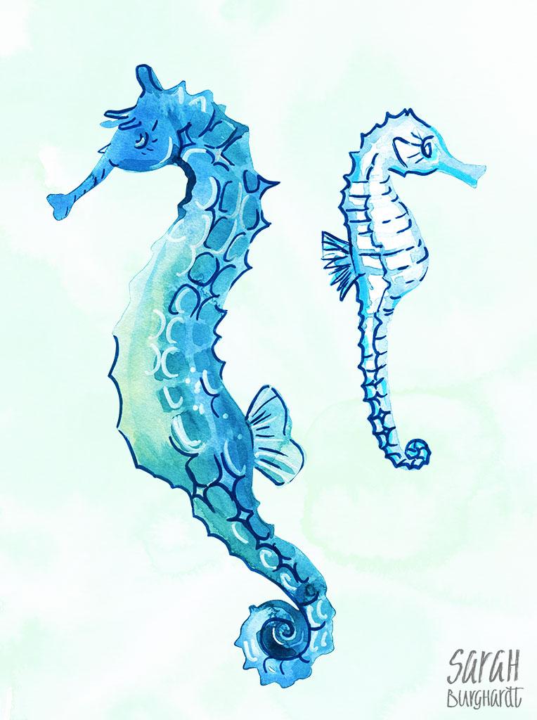 Seahorses Seepferdchen